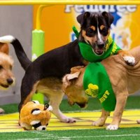 Puppy Bowl Adoption Dogs